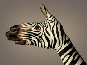 zebra_body_art_1600x1200